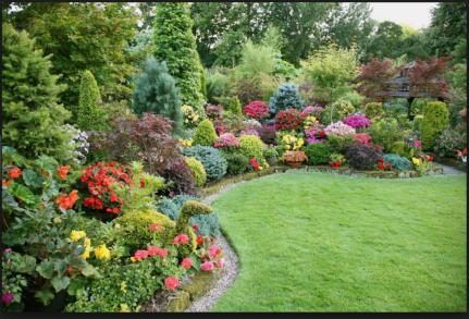 flower gqrden